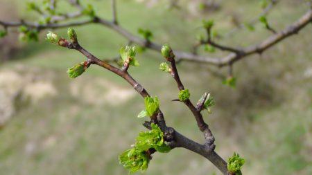 spring, branch, kidneys