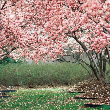 spring, garden, flowering