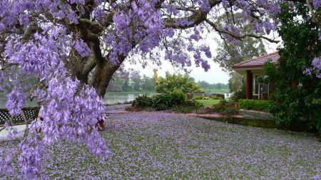 spring, tree, blossoms