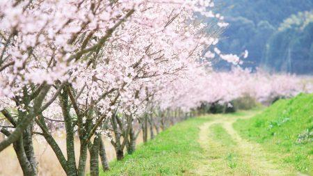spring, trees, flowering