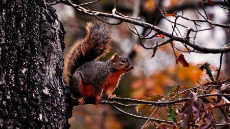 squirrel, branch, sit