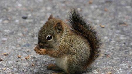 squirrel, eating, sitting