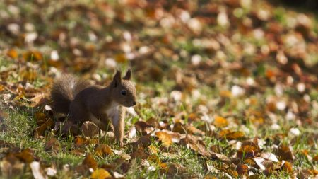 squirrel, grass, leaves