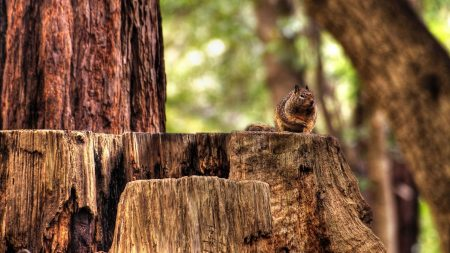 squirrel, hemp, sitting
