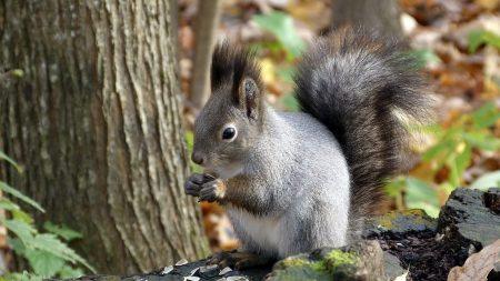 squirrel, leaf, tree