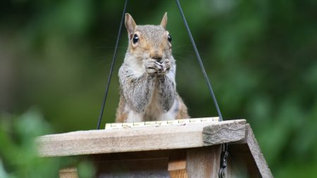 squirrel, legs, sitting