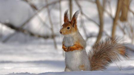 squirrel, park, snow