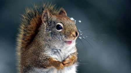 squirrel, tail, snout
