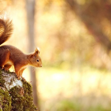 squirrel, tree, jump