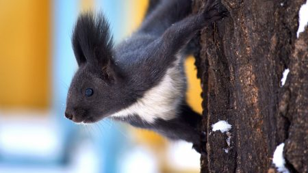 squirrel, tree, snow