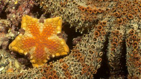 starfish, underwater, water