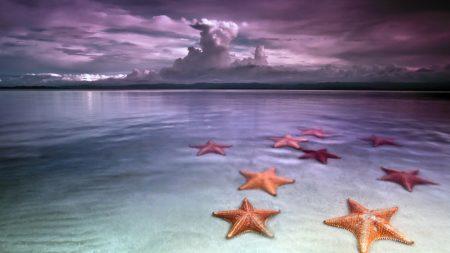 starfishes, coast, decline
