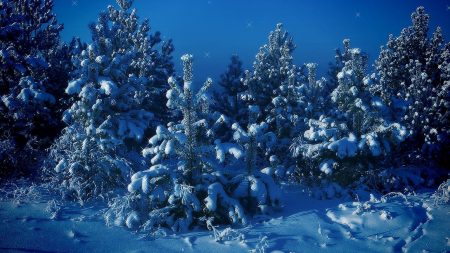 stars, pines, snow