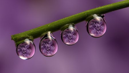 stem, drops, dew