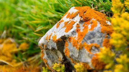 stone, moss, grass