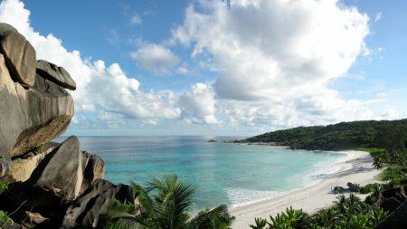 stones, coast, palm trees