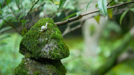 stones, moss, snails