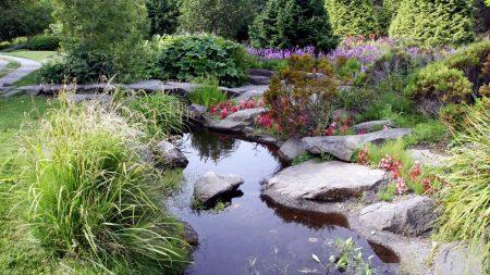 stones, pond, garden