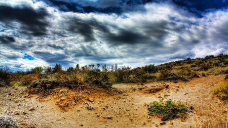 stones, sand, plants