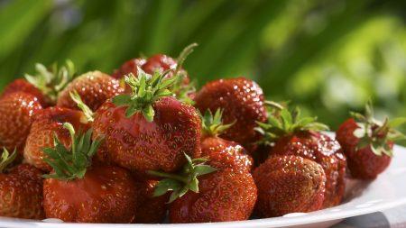 strawberries, food, red