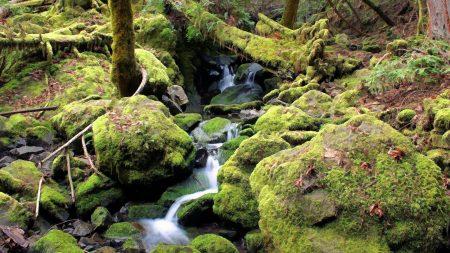 stream, moss, stones