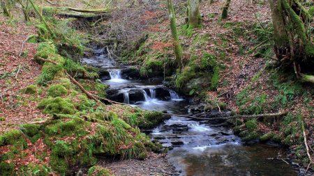 stream, wood, moss
