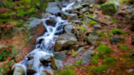 stream, wood, stones