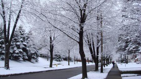 street, road, trees