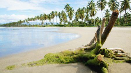 stub, moss, beach