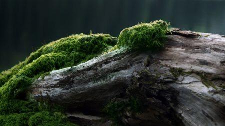 stub, moss, tree
