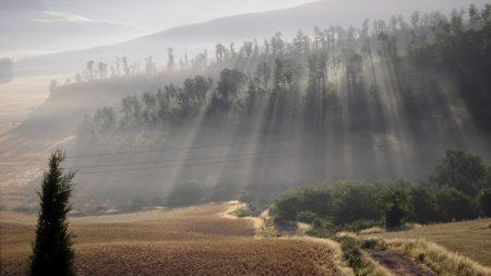 sun, beams, fog