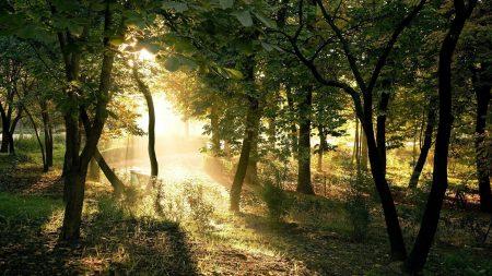 sun, beams, wood