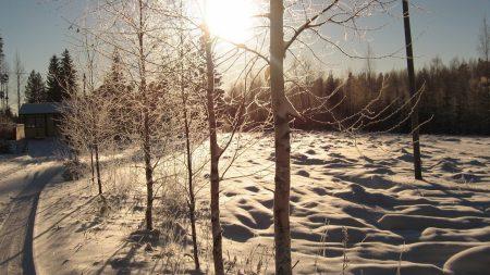 sun, day, birches