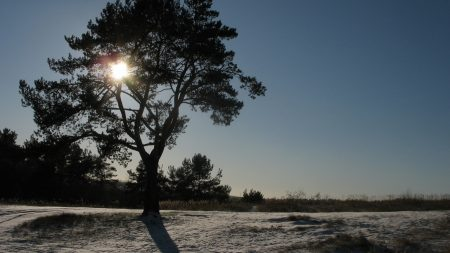 sun, day, tree