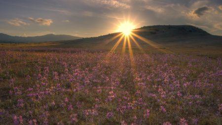 sun, evening, decline
