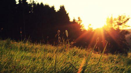 sun, light, blades