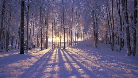 sun, morning, wood