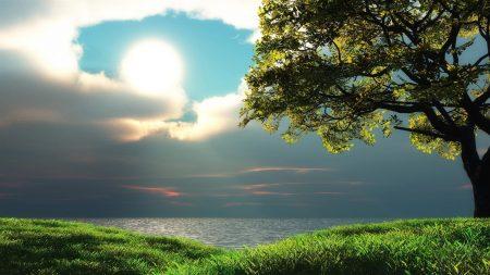 sun, tree, cloudy