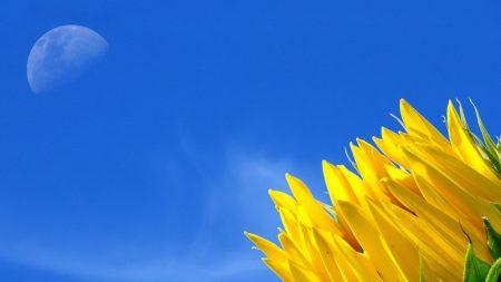 sunflower, moon, sky