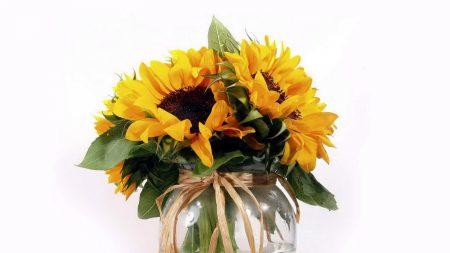 sunflowers, flower, leaf