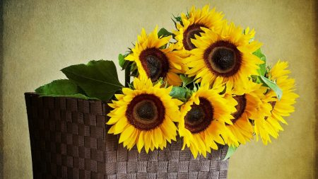 sunflowers, shopping, wall