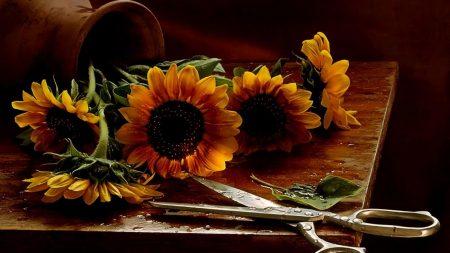 sunflowers, vase, drops