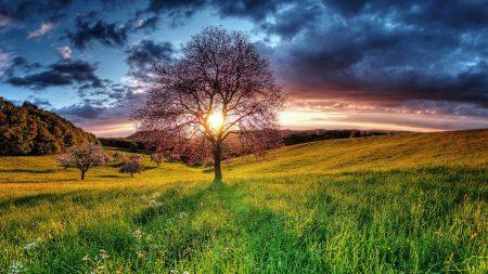 sunset, field, sky