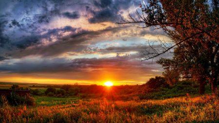sunset, field, trees