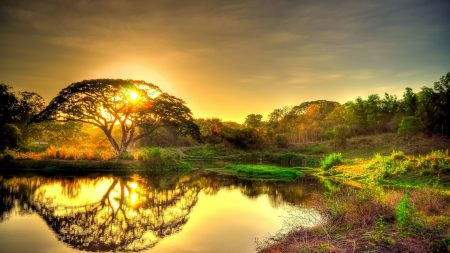 sunset, pond, trees