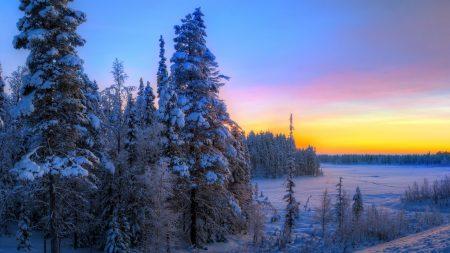sunset, winter, trees