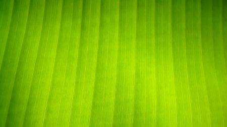 surface, leaf, stripes