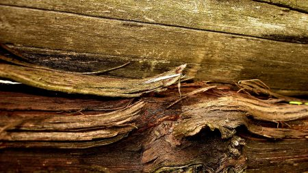 surfaces, wood, old