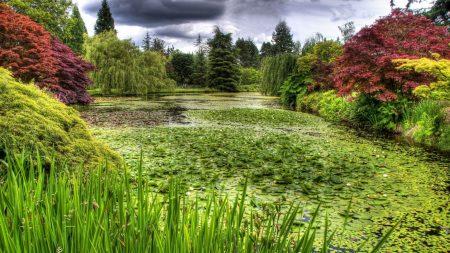 swamp, grass, trees