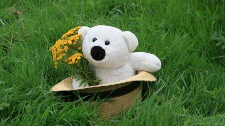 teddy bear, hat, grass